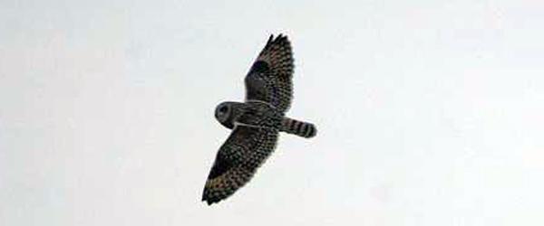 Naturvejleder tilbyder: Aftenfugletur ved Stensnæs