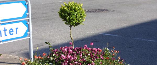 Ekstra knald på blomsterkummerne