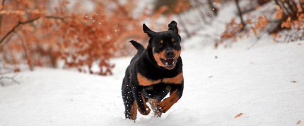 Også hunden skal gøres vinterklar!