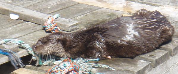 Sæby Havn et godt sted for både dyr og mennesker