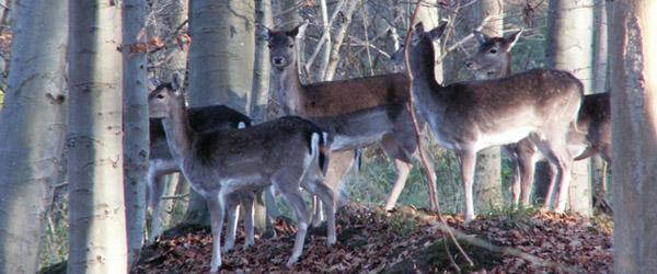 Vilde dyr, våben og natur på Torvet i Sæby