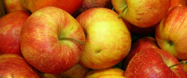 Sådan gemmer du årets æblehøst