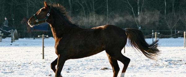 Sneen og frosten skyld i løse heste