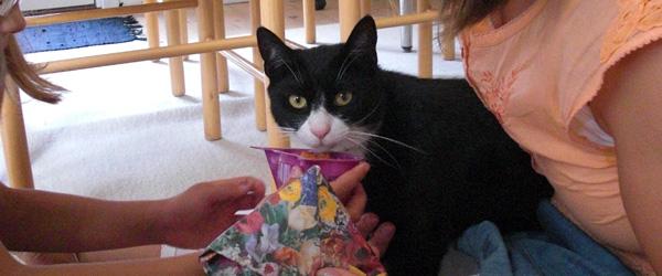Efterlysning: Har nogen set vores kat Felix?