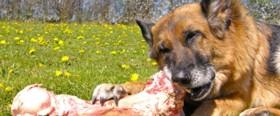 Hundeseminar_600x250