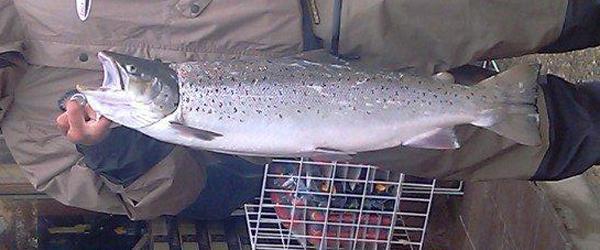 Lystfisker havde heldet med sig i Sæby Havn