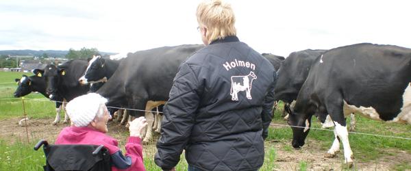Køerne kom på græs – mens de ældre så på