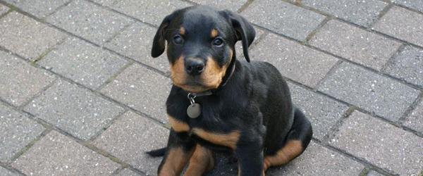 Sæby's sødeste kæledyr på Torvet i Sæby
