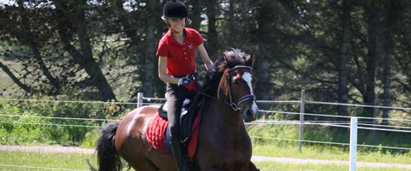 Ny bestyrelse og nye tider i Sæby Rideklub
