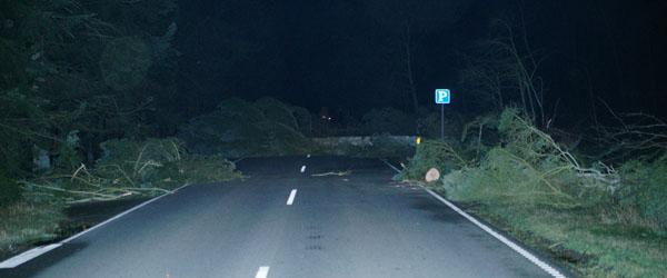 Østkystvejen er igen spærret – flere træer er væltet