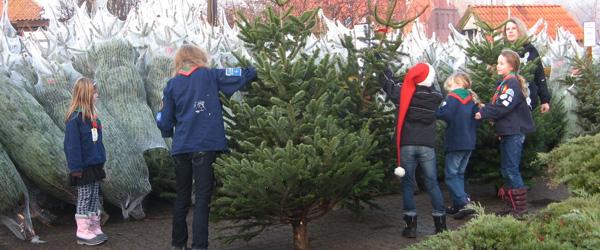 Spejdernes juletræssalg starter i dag lørdag