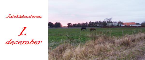 1. december: Vollerup Gård og den røde ko