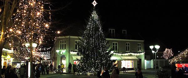 Juletræer pryder snart i hele kommunen
