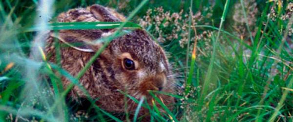 Dyrenes Beskyttelse: Lad dyreungerne være…