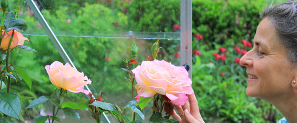Havearkitekt afholder dag med fokus på roser