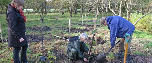 Der blev plantet træer i Nellemanns Have