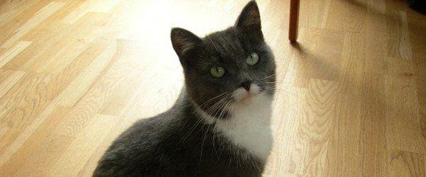 EFTERLYSNING: Har nogen set vores kat?