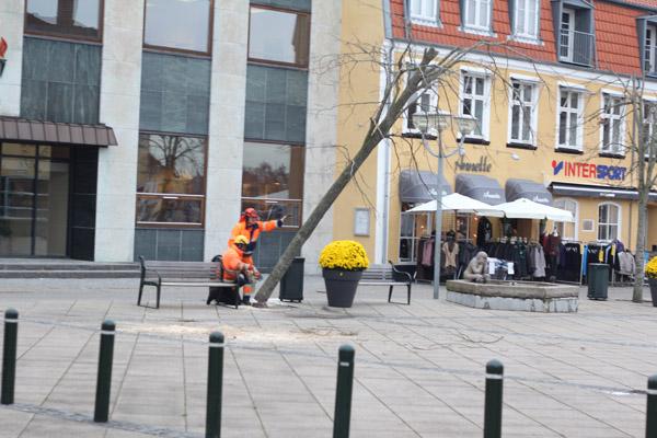 Træerne på Sæby Torv må lade livet