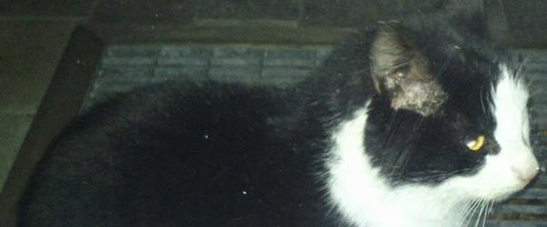 Stor hvid kat fundet død – ejer efterlyses