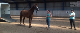 Hest rideskole_600x250