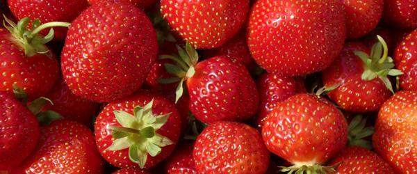 Jordbærrets dag<br>…