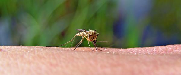 Apoteket informerer om myg<br>…