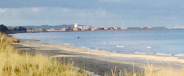 Fugleinfluenza konstateret<br> i sølvmåge fundet ved Sæby