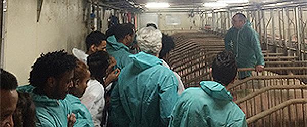 Flygtninge besøgte svinelandbrug i Syvsten