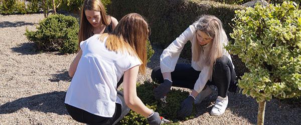 To arbejdsdage på Sæby kirkegård for 8. klasserne