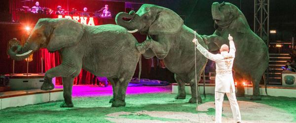 Forrygende, flot cirkus besøgte Sæby