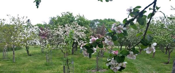 Dejlige Nellemanns Have<br> holder åbent hver dag