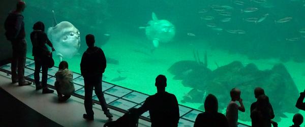 Vind årskort til Nordeuropas<br> største akvarium i Hirtshals