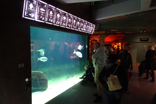 nordsøen lille akvarium_600x400