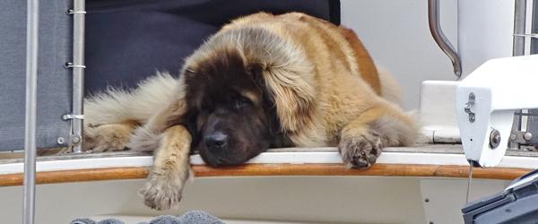 Selv skibshunden er glad<br> for at besøge Sæby