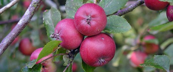 æbler_600x250