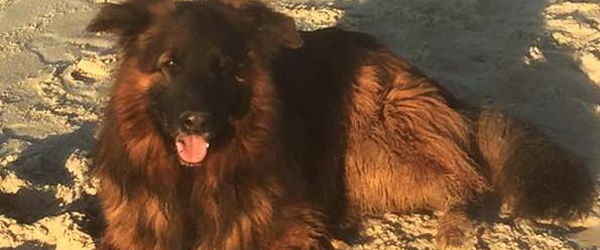 Efterlysning: Har du set<br> Jakobs hund Flint?