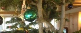 juletræspynt eva_600x250