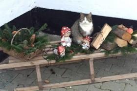 Katten Pjuske julehygger med nisserne - indsendt af Line Heidi Jensen fra Sæby