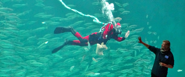 Vind adgang til Nordsøen<br> Oceanarium i Hirtshals