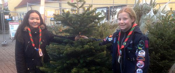 Spejdere sælger juletræer af bedste kvalitet