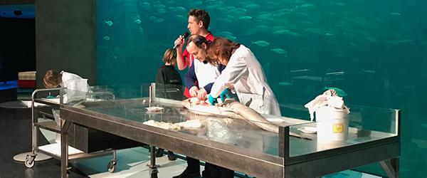 Vinterferieaktiviteter på Nordsøen Oceanarium