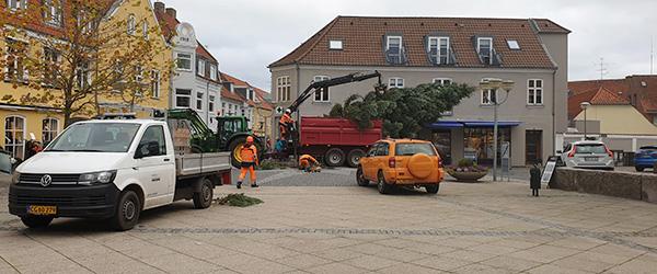 Så blev det store juletræ rejst på Torvet i Sæby