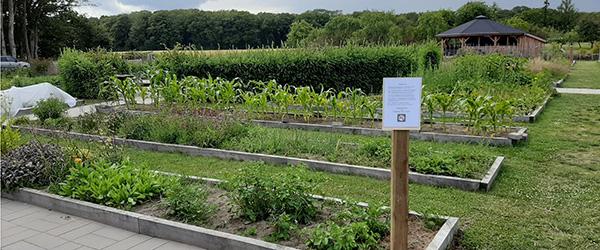 Rygterne går om fri afbenyttelse af afgrøder fra Nellemanns Have