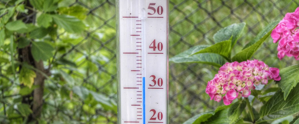 thermometer-398735_1920
